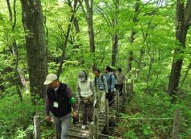 留山の遊歩道