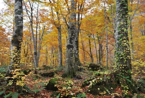 秋の白神山地岳岱の絶景スポット