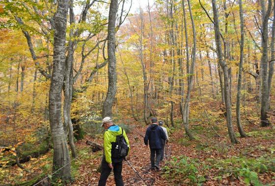 ぐるり白神1周!世界遺産白神山地の主要トレッキングスポットを巡る秋の秋田発着ツアー5日間