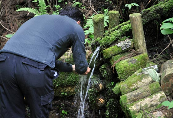 青秋林道の美水