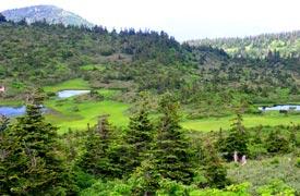 八甲田山頂上の散策コース