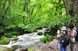 奥入瀬渓流の散策コースにある阿修羅の流れ